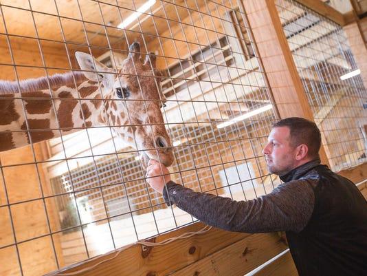 baby-giraffe-041817-2