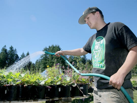 Dustin Harris waters vegetables at Pheasant Fields Farm in Silverdale. A new law, supported by Pheasant Fields owner Nikki Johanson, offers farmers some liability protection when they host agri-tourism events.