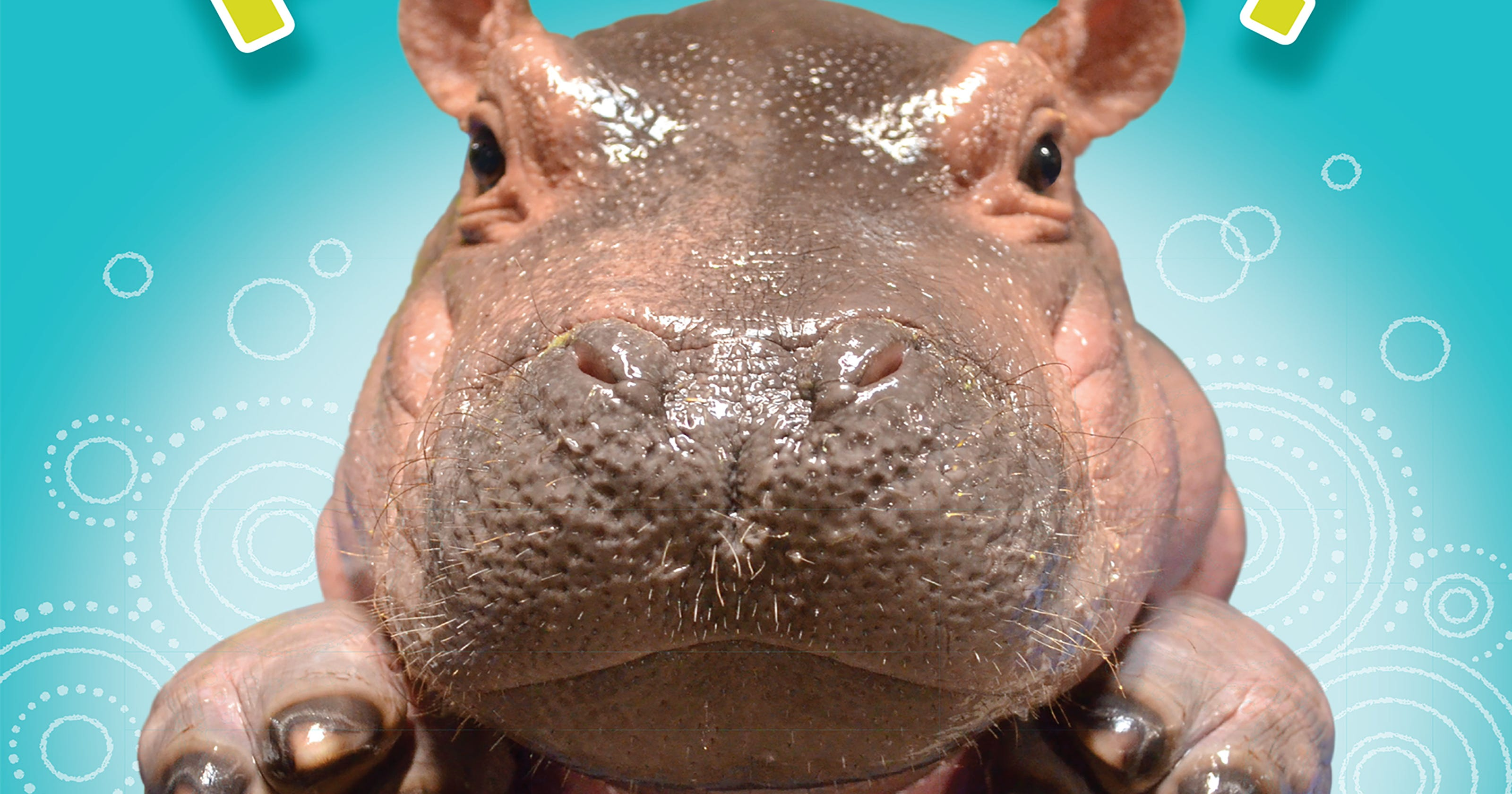 Fiona The Baby Hippo Featured In New Children S Book