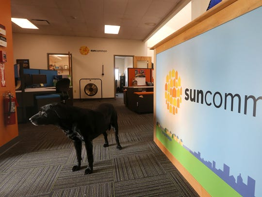 Frankie, an employee dog roams through the office at SunCommon NY.