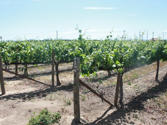 The vineyards at South Coast Winery in Temecula are