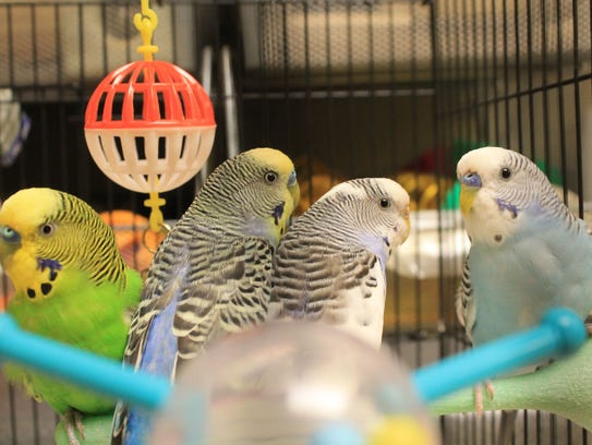 HAWS pet of the week (for Sept. 22): Parakeets