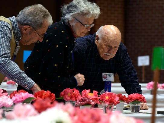 Judges check out the camellias during the 79th Pensacola Camellia Club Show and Sale in December. On Saturday, the Pensacola Camellia Club is sharing its expert advice at a workshop and plant sale at the Northeast YMCA on Langley Avenue.