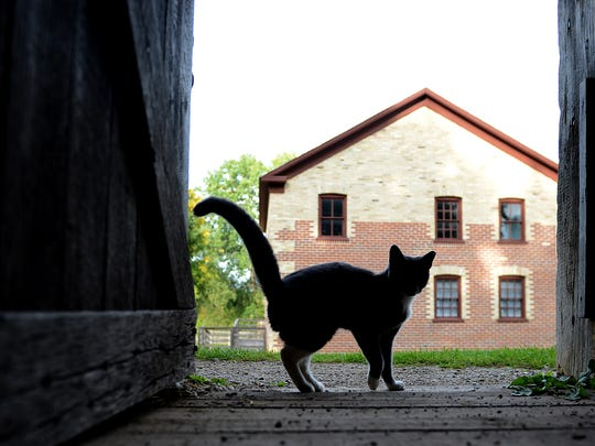 Since the arrival of cats adopted from Bay Area Humane Society two years ago, Heritage Hill State Historical Park has seen a major decline in mice.