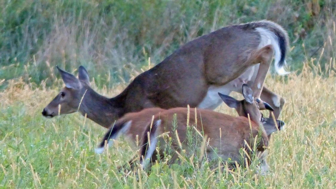 Mild winter leads to big herd for deer hunters
