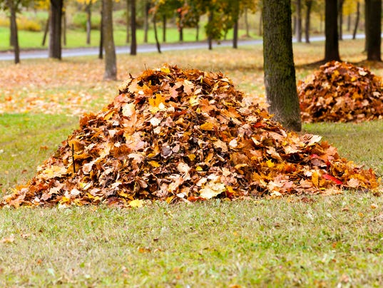 Here S Why You Should Avoid Raking Your Leaves