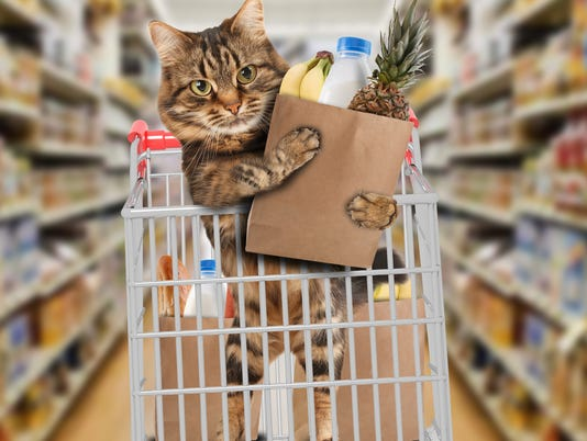 Funny cat in the store