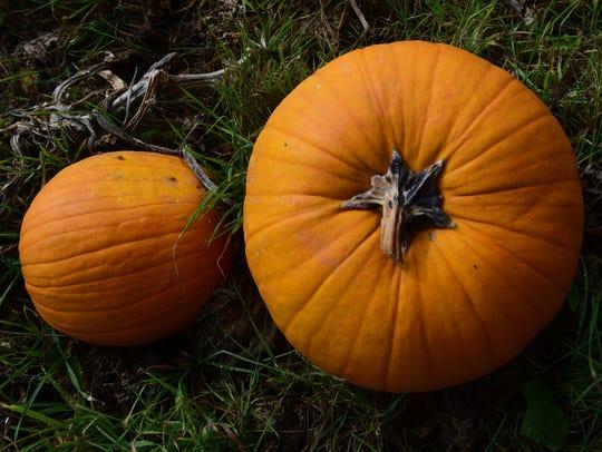 Pumpkins are available at Cedar Grove Farm Store 1120