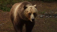 A proposed rule released Monday by Montana Fish, Wildlife and Parks sets a population objective of at least 800 grizzlies in northwestern Montana.
