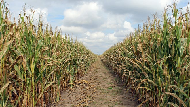 This is the season to explore farm life, one cornfield at a time.