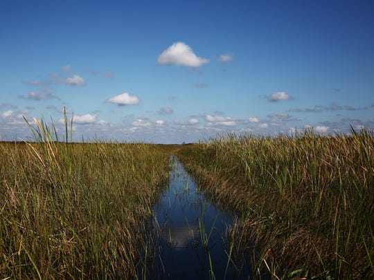 The view from an airboat in the Everglades National Park on Nov. 1, 2015.