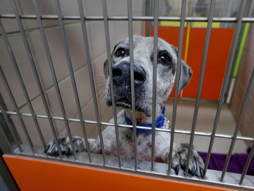 Exercise caution when adopting a dog from a hurricane region