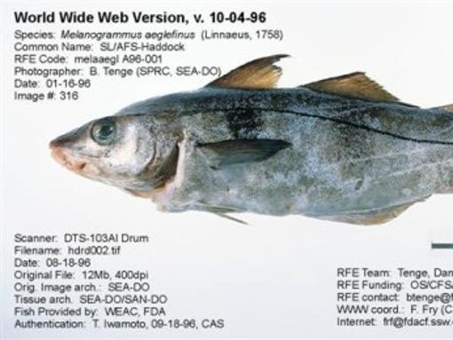 Eat more fish but eat lower mercury fish draft says for What fish has the most mercury