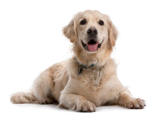 dog (2).jpg
