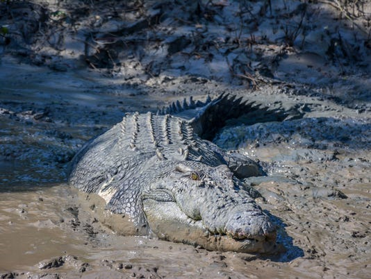 Big crocodile named 'Brutus' near the Adelaide River, Darwin, Australia