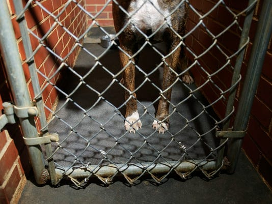 Legs of dog in kennel