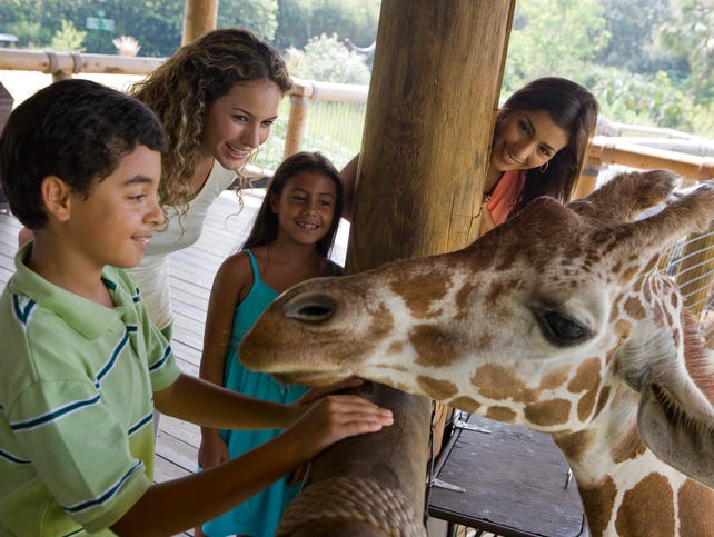 A day at the Zoo offers adventures like no other place in the Valley of the Sun.