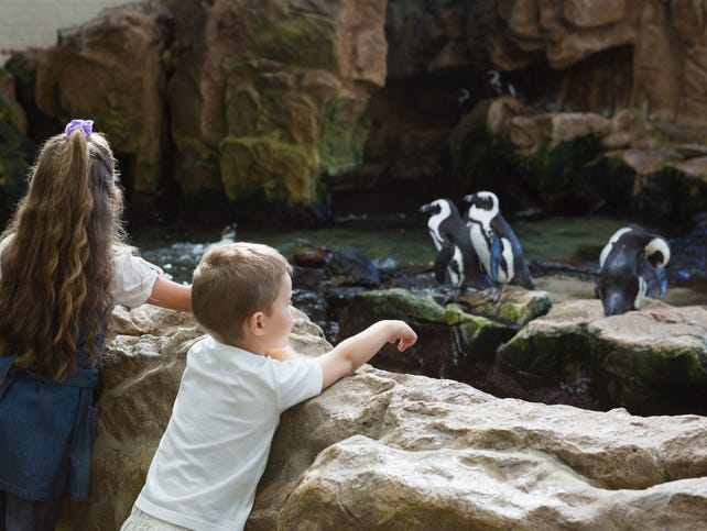 Take everyone out for a day or two of fun at the San Diego Zoo!