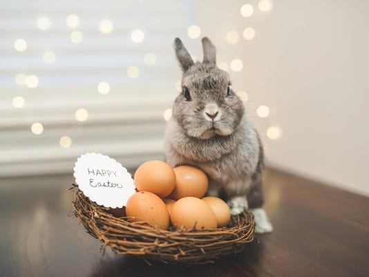 Bunny rabbit watching over basket of Easter eggs