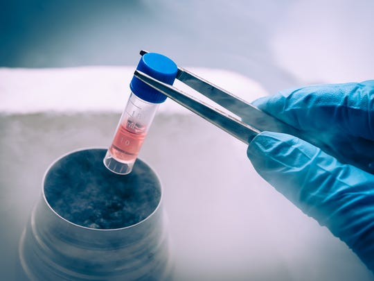 Stem cells are the cells that develop into organs, blood, brain and bones.
