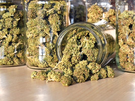 Dry and trimmed cannabis buds, stored in a glass jars
