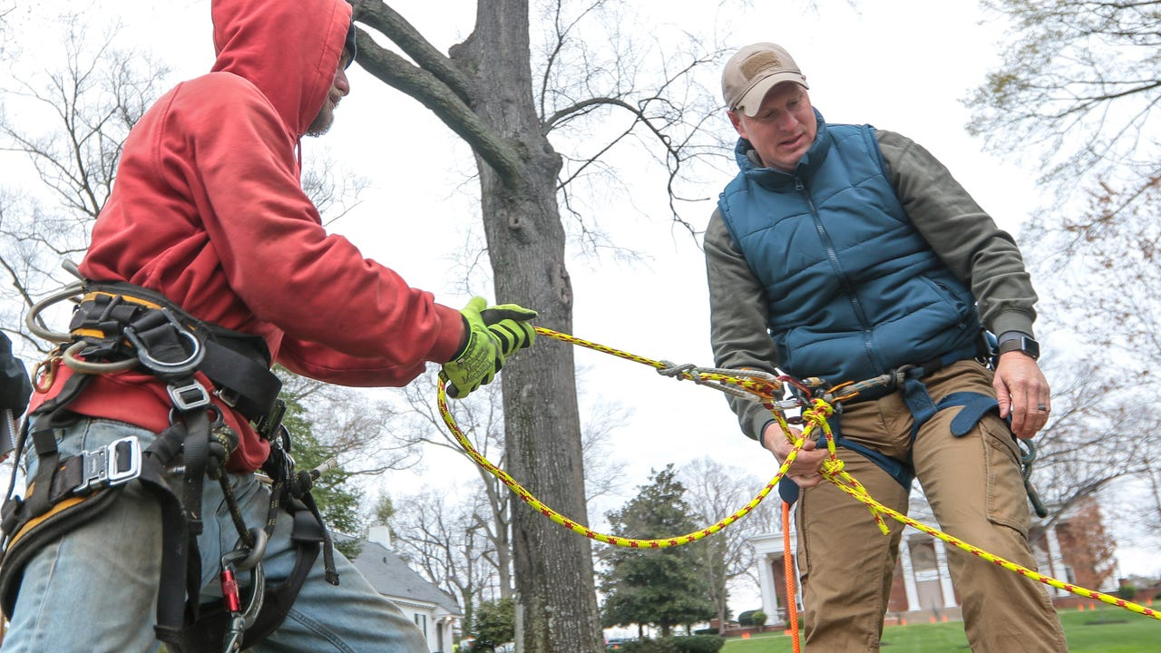 Arborists begin the work of cutting down a dying tree on Boulevard in front of Anderson University.