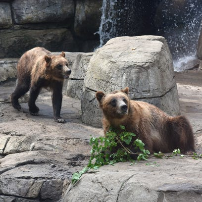 """""""Fortress of the Bears"""" opens at the Great Plains Zoo"""