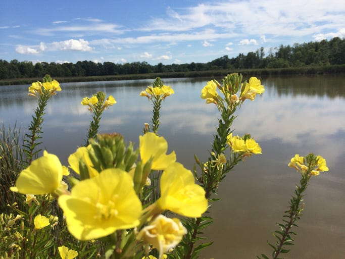 Flowers bloom on the shore of a pond in Livingston County.