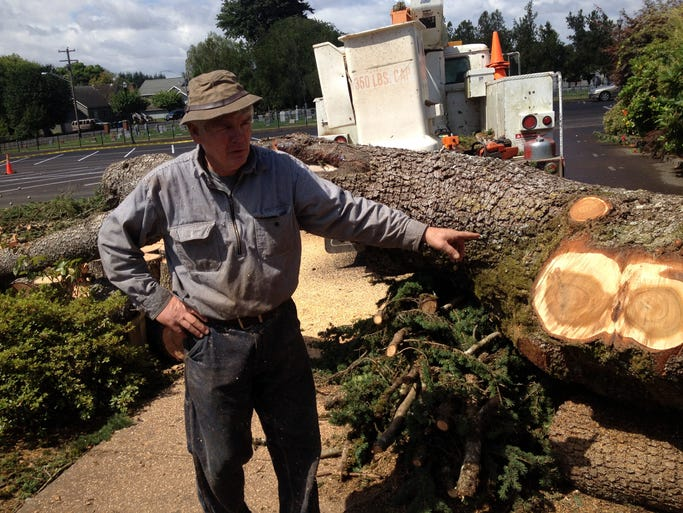 Stayton-area resident Travis Bauldree points to rotting parts of limbs in a cedar of Lebanon that he cut down Thursday, July 24, 2014. The tree stood between the Saint Boniface Church and rectory in Sublimity, and posed a threat to both.