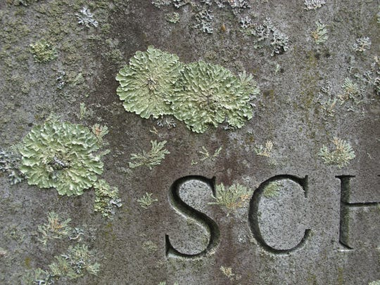 LIchen adorns (or mars, depending on your point of