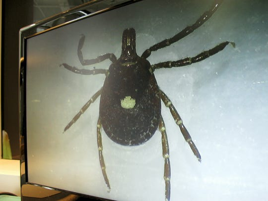 A Lone Star tick is displayed on a monitor in a lab