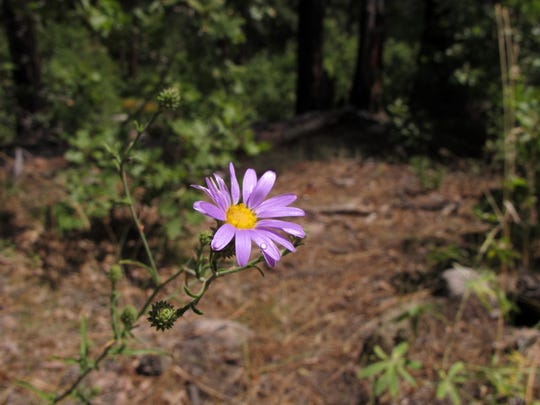 A flower grows along Mill Creek as it flows through