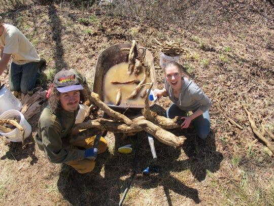 Processing roots at Kudzu Camp.