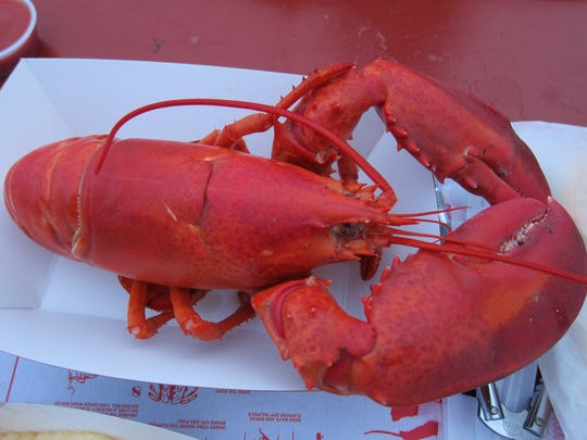 The North Atlantic lobster, also known as American