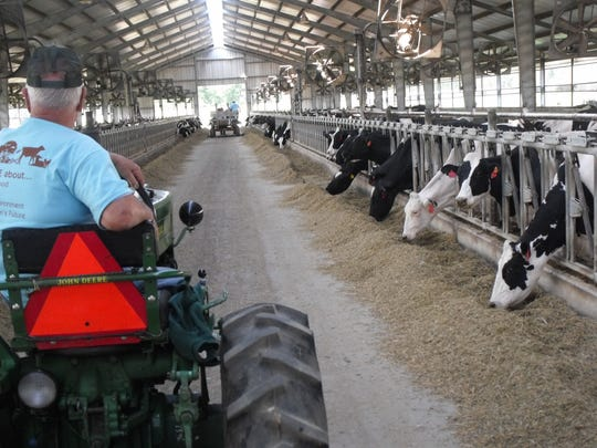 The view from the hay wagon as the tour went through one of the long barns where the cows reside.