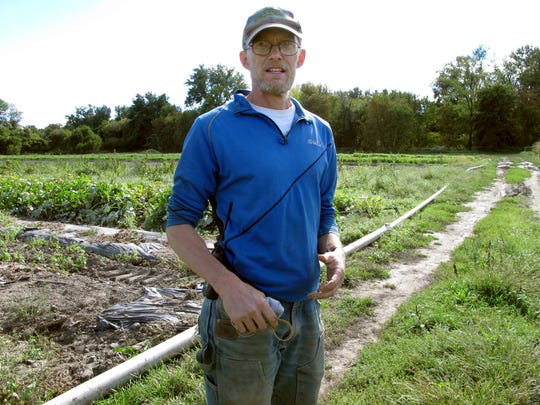 Andy Jones of the Intervale Community Farm stands near a sweet potato crop at the farm in Burlington, VT. The farm is irrigating crops more frequently due to longer spans of dry weather.