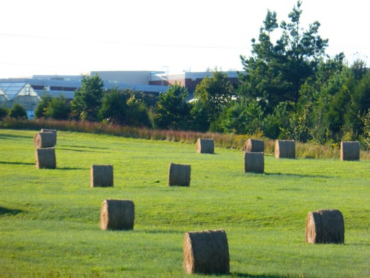 The strong geometric form of hay bales appeal to the