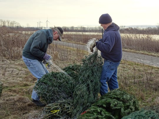 Dick Thompson, left, and Dave Starner, right, prepare Christmas trees donated by Lowe's to be put in the lake along Marion Tallgrass Trail. The trees create a habitat for the bluegill, crappie and other fish living in the lake.