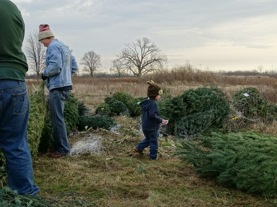 Jeremiah Anderson, 2, wanders among the 115 Christmas trees donated by Lowe's to the Marion County Park District. The park district plans to use the trees to create fish habitat in a lake along Marion Tallgrass Trail.