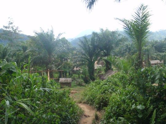 A village in Pinga, Democratic Republic of the Congo,