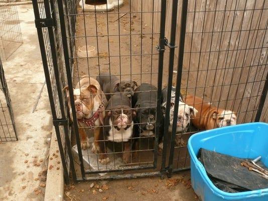 636596533489775466-bulldogs.jpg