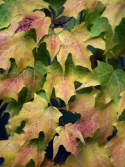 Leaves are turning at Plamann Park in Appleton. While