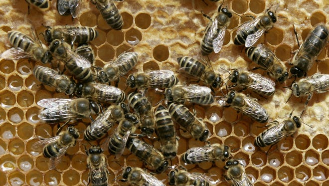 In this file photo, honey bees sit on a honeycomb.