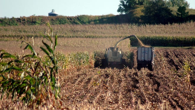 Farmers work to bring the harvest in.