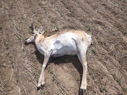 636301042832278597-poached-antelope.JPG