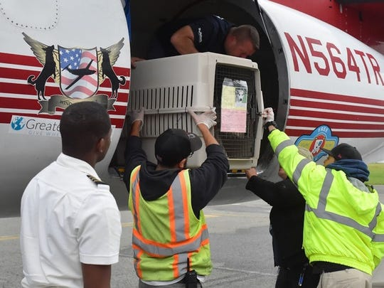 """Staff members at St. Hubert's Animal Welfare Center unload 86 dogs from overburdened Mississippi shelters off two """"Wings of Rescue"""" aircraft at Morristown Municipal Airport in Hanover. May 27, 2018."""