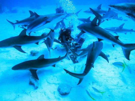 Shark Girl 2
