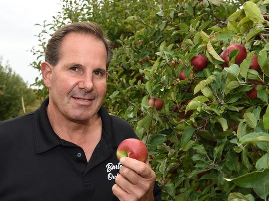 Peter Barton of Barton Orchards is shown in one of his apple orchards at Barton Orchards in Poughquag.