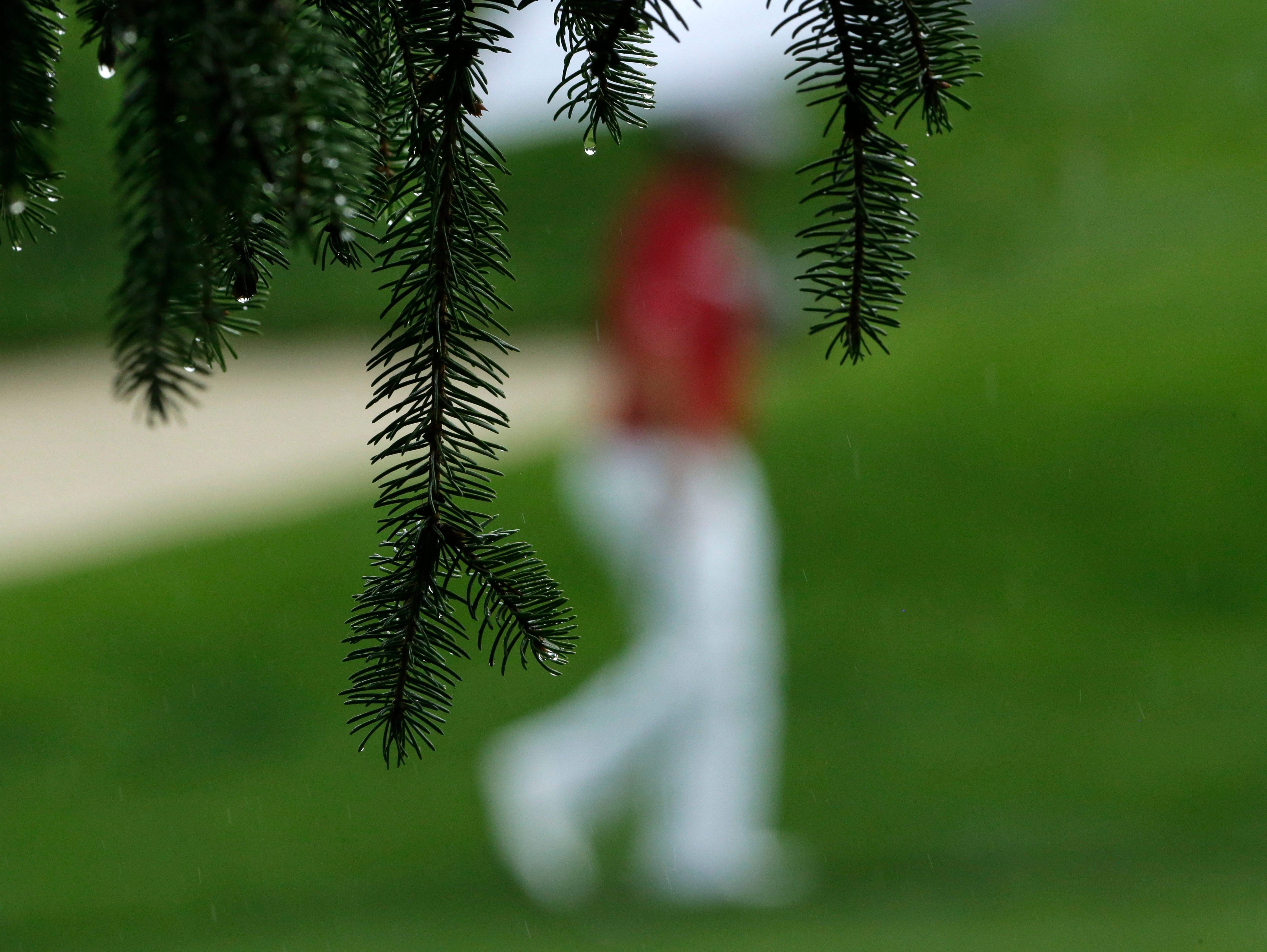 Rain drops fall from the branches of a pine tree as Scott Piercy walks up the fairway on the ninth hole.