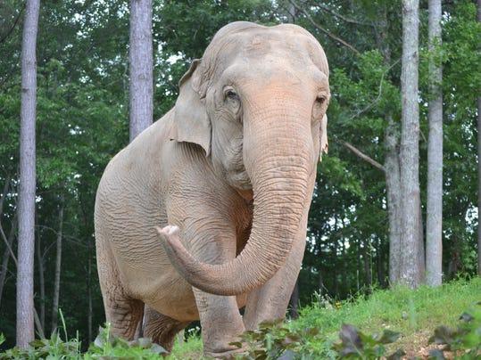 NAS-ELEPHANT BILLIE (2).JPG